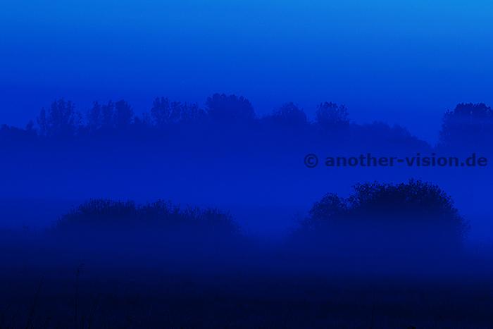 blauer Nebel - blue fog